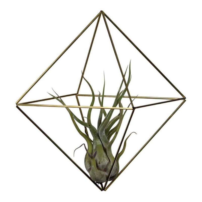 Himmeli Cube medium van Messing | Leuke DIY huisdecoratie van draadzaken | Maak deze himmelis zelf af en leg er een mooi luchtplantje in | Tillandsia | www.homeseeds.nl