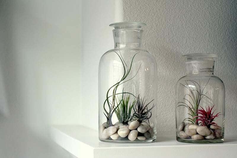 Doe je luchtplantje in een glazen pot of fles | 9 makkelijke diy tips voor luchtplantjes in huis | www.homeseeds.nl
