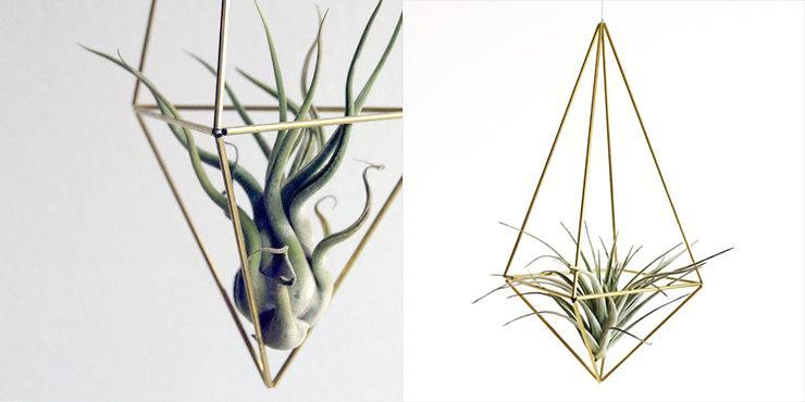 Draadzaken himmeli drop tillandsia medusa | 9 makkelijke diy tips voor luchtplantjes in huis | www.homeseeds.nl