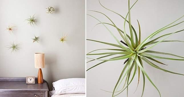 Hang eenvoudig je luchtplantje op aan visdraad   9 eenvoudige tips voor luchtplantjes in huis   www.homeseeds.nl