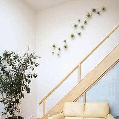 Hang je luchtplantjes direct aan de muur in huis | Negen makkelijke doe-het-zelf tips voor luchtplantjes in huis | www.homeseeds.nl