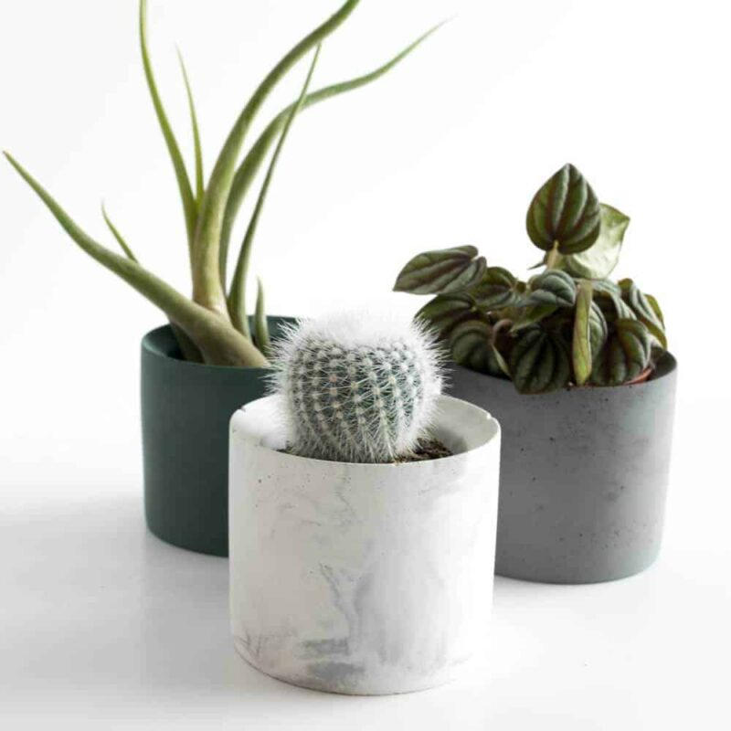 hippe ronde bloempotjes van beton