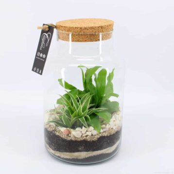 plantenterrarium DIY do it yourself met varenachtigen