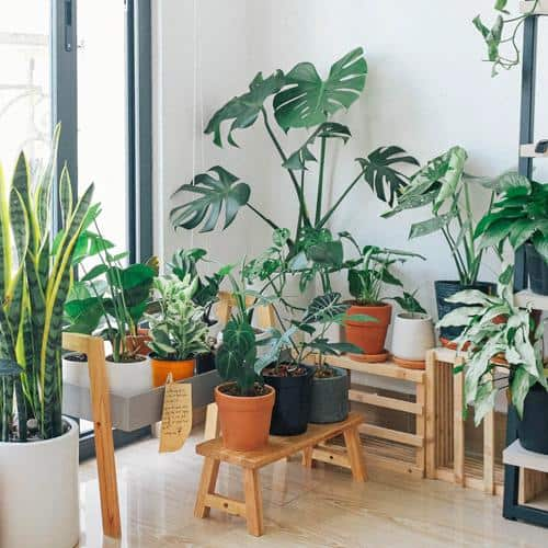 9 Hippe kamerplanten voor jouw urban jungle 2020