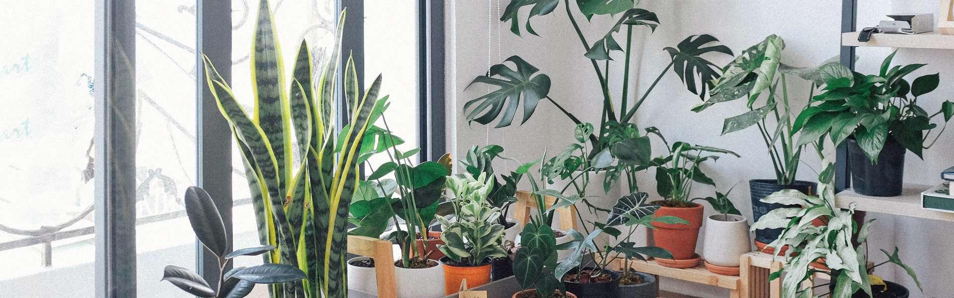 Kamerplanten die je moet hebben in 2020