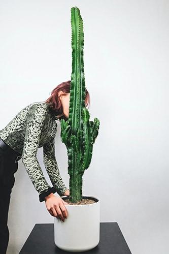 Cowboycactus Euphorbia cactussen | Groene kamerplanten | Homeseeds.nl